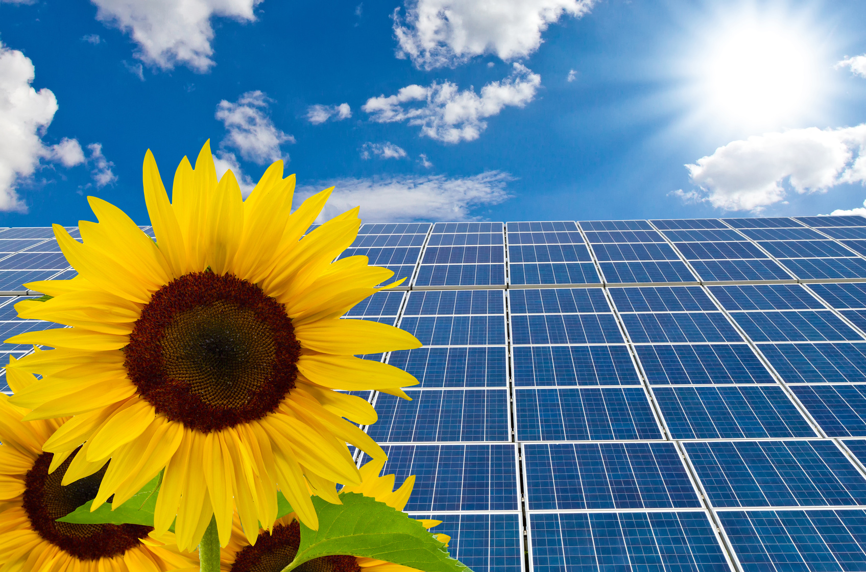 Solaranlage mit Sonnenblumen im Vordergrund